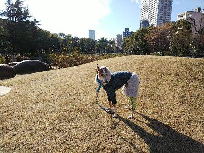 靭公園散歩10