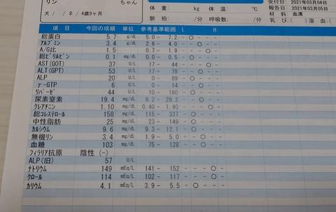 イタプー鈴りん健康診断n (4)