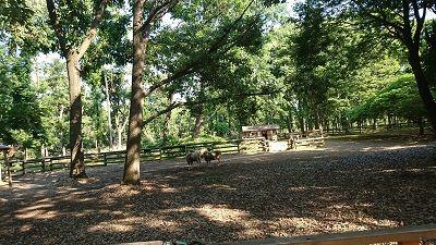 大泉緑地公園9