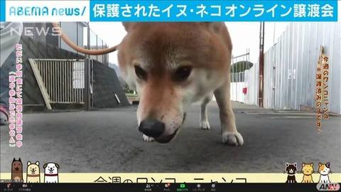 保護された犬のオンライン譲渡会