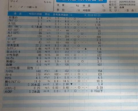 イタグレ_ジェイ_健康診断3