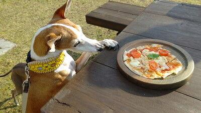 道に駅せせらぎの里こうらわんちゃんピザ