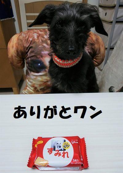 すみれちゃん1