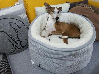ニトリの犬用ベッド