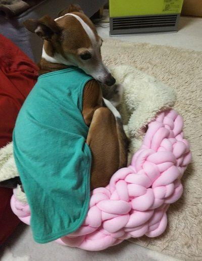 手編犬用ベッド3