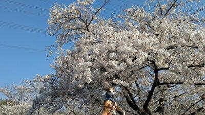 花園中央公園イタグレ9
