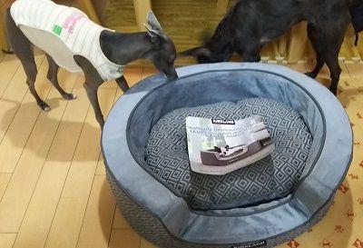 コストコ犬用ベッド6