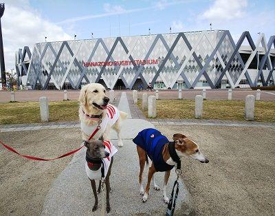 ラグビー日本代表公式ジャージ犬用1