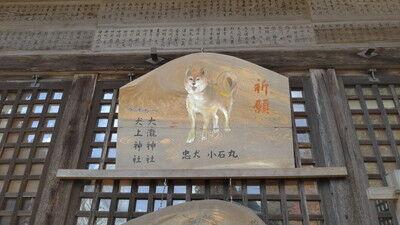 犬上神社イタグレ (7)