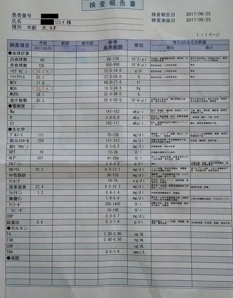 イタグレジェイ_血液検査