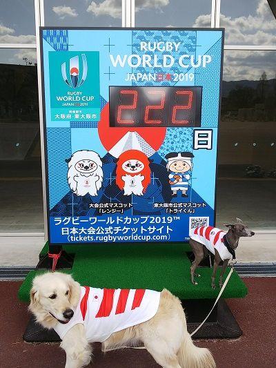 ラグビー日本代表公式ジャージ犬用6