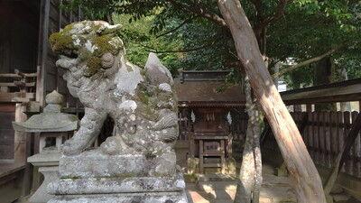 犬上神社イタグレ (2)