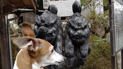 大瀧神社犬上神社 (6)