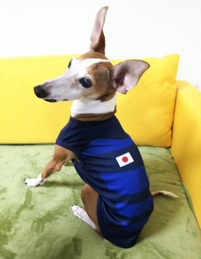 ラグビーワールドカップ犬イタグレ4