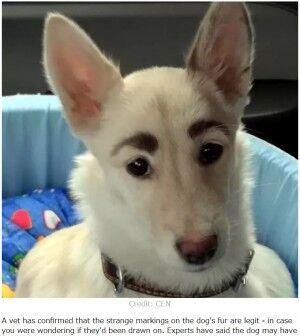 立派な眉毛の犬