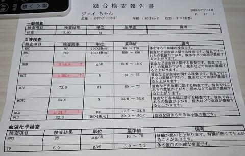 イタグレ_ジェイ_血液検査