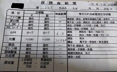 イタグレ定期健診2_LI