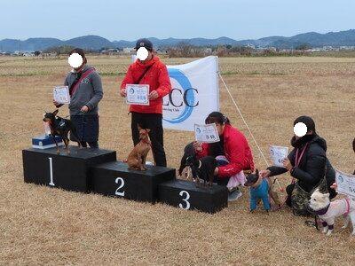 20191229klcc7_小型犬ビギナークラス