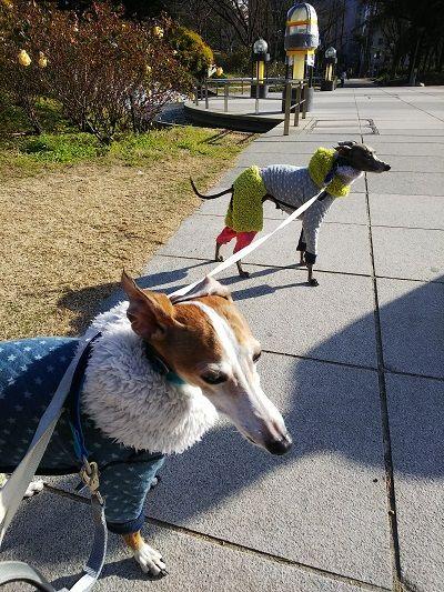 靭公園散歩9
