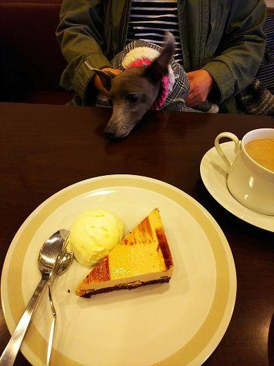 dogcafe-pu2