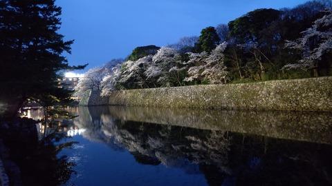 彦根城夜桜 (2)