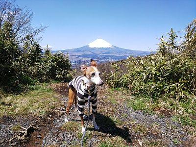 箱根スカイライン_イタグレ6