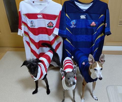 ラグビーワールドカップ日本代表犬服