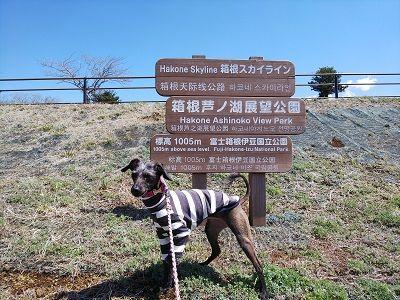 箱根スカイライン_イタグレ8
