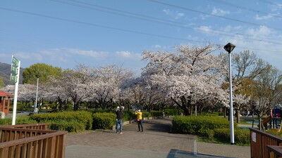 花園中央公園イタグレ5