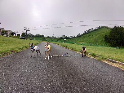 大山高原豪円山ロッジ3