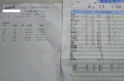犬_血液検査_アルブミン