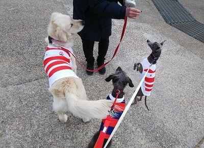 ラグビー日本代表公式ジャージ犬用8
