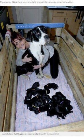 21匹の子犬