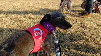 KLCC_japanesegreyhoundderby2021 (11)