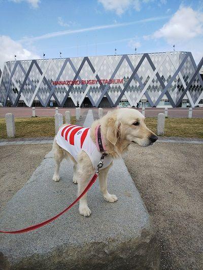 ラグビー日本代表公式ジャージ犬用2