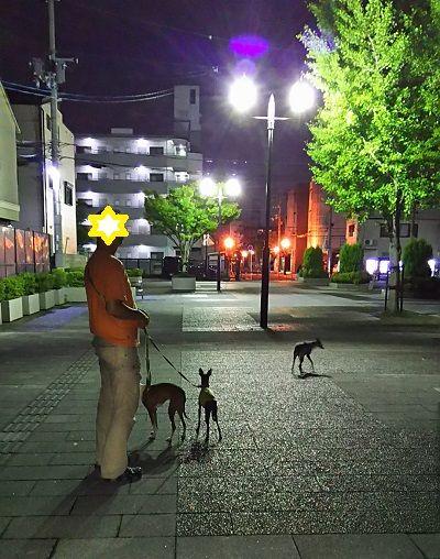 花園中央公園_散歩4