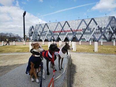 ラグビー日本代表公式ジャージ犬用3