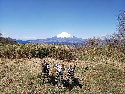 箱根スカイライン_イタグレ2