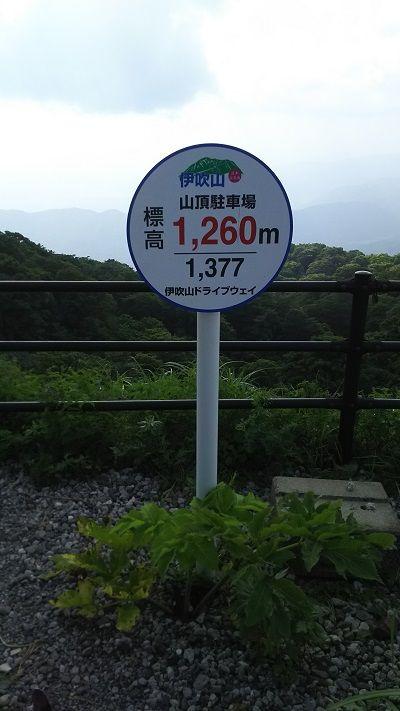 伊吹山ドライブウェイ3_イタグレ