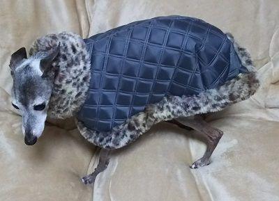 犬服_コート1