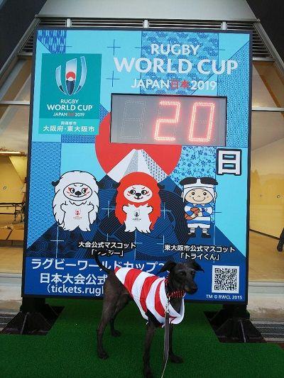 花園ラグビー場ワールドカップ