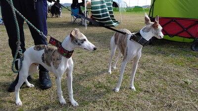 KLCC_japanesegreyhoundderby2021 (12)