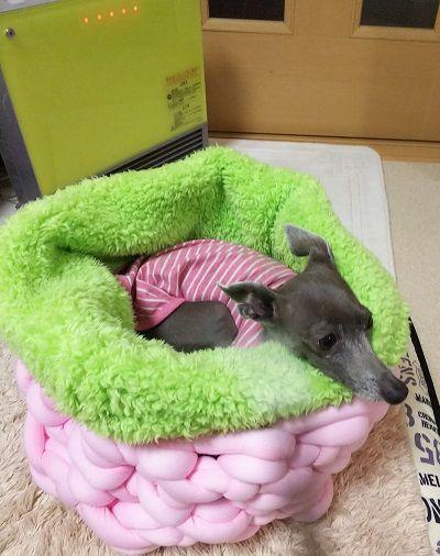 手編犬用ベッド2
