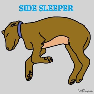 寝相で分かる愛犬の性格3
