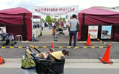 WANDARAKE1