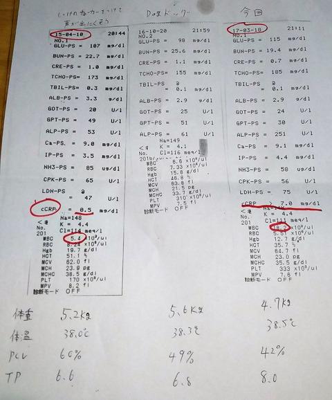 犬_血液検査3