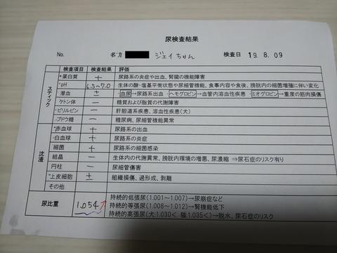 イタグレ_ジェイ_尿検査