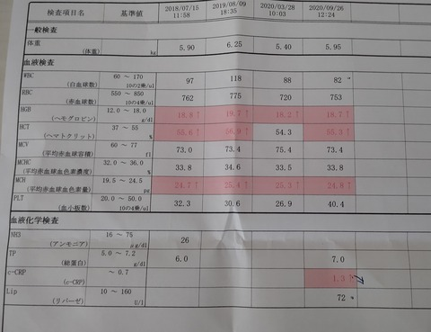 イタグレ_ジェイ_血液検査い (3)
