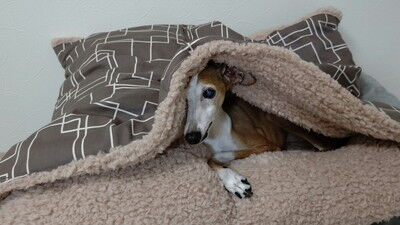 犬用蓋付きクッション (1)