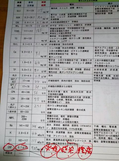 犬_血液検査2